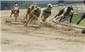 Greyhounds race at Southland Park Gaming